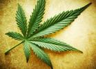 States Where Marijuana Is Legal, Decriminalized or Medicalized