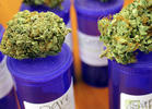 Study Says Pot's Good for Pain