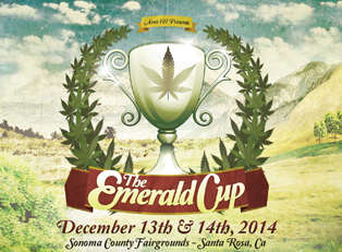 Emerald Cup Grows in Santa Rosa