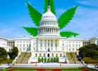 New Pro-Cannabis Bills on the Hill