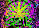 311's Pot Leaf Fillmore Poster