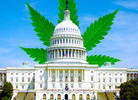 Congress' Cannabis Caucus Calls for Marijuana Rescheduling