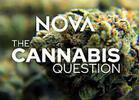 TV Review: PBS/NOVA's 'The Cannabis Question'