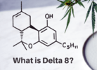 Cannabinoid Alert: What's the Deal with Delta-8 THC?