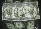 Venture Capitalists Giving Weed the Green Light