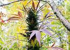 Trim Trim Cher-ee: My Week at the Purple Pot Farm
