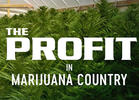TV Review: CNBC's 'The Profit in Marijuana Country'